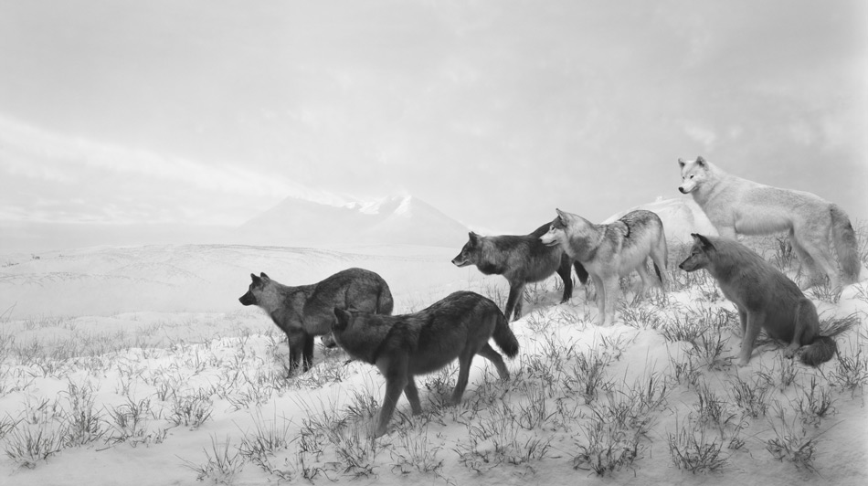 Cartier-ArtContemporain-2016-135_Alaskan-Wolves,-1994