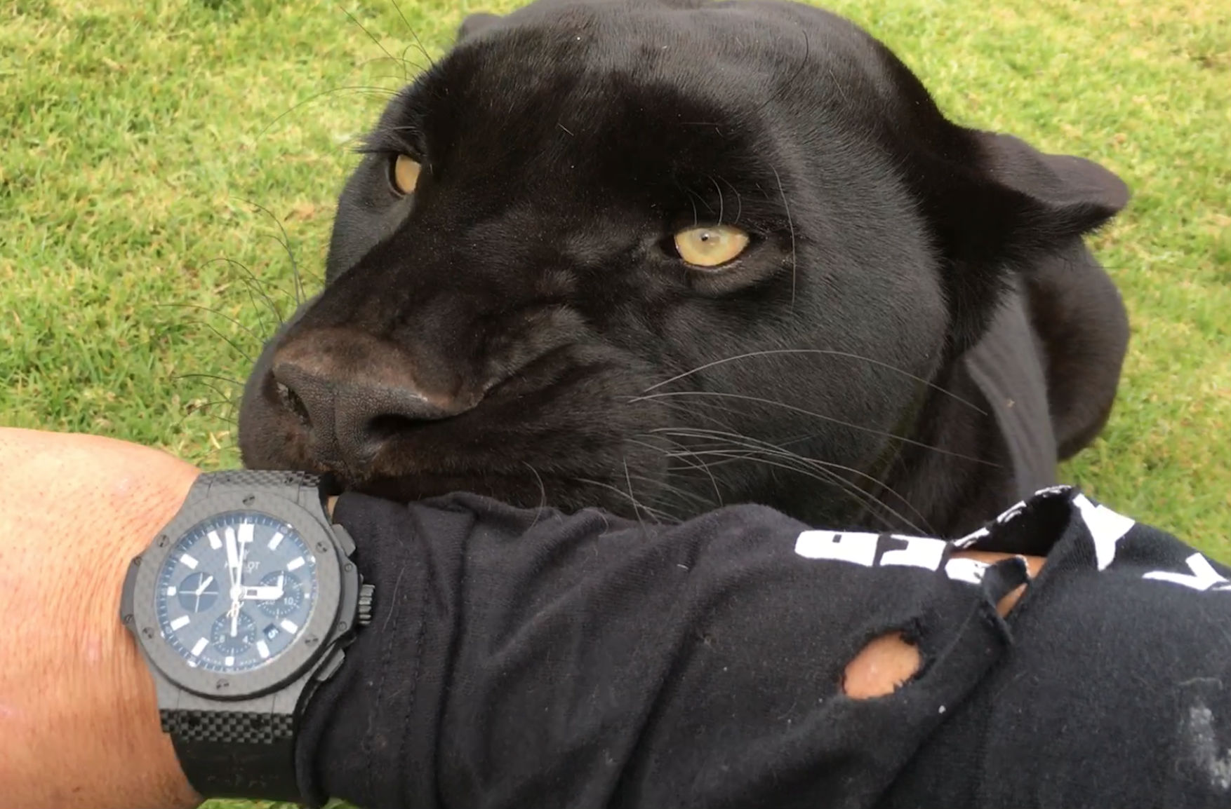 black-jaguar-hublot1