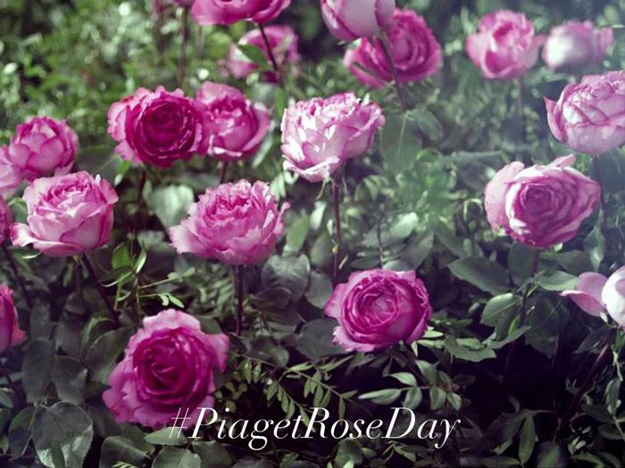 1er Día de la Rosa Piaget