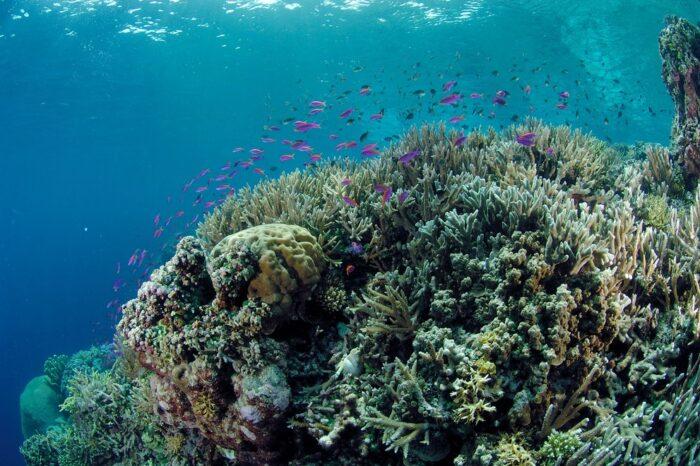 Rolex Perpetual 25 Per Cent Marine Species Depend Coral Reefs